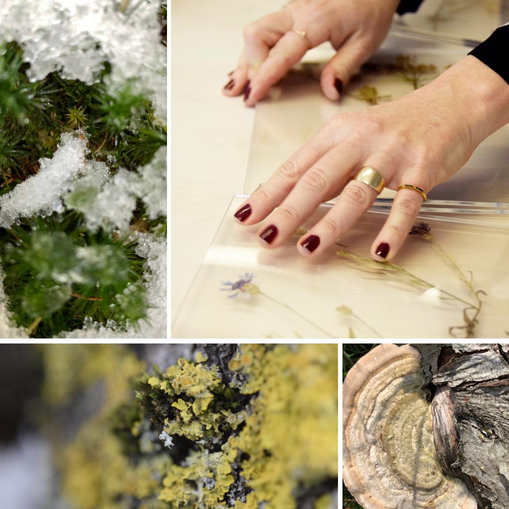 STED, herbarium, danske mosser og svampe.