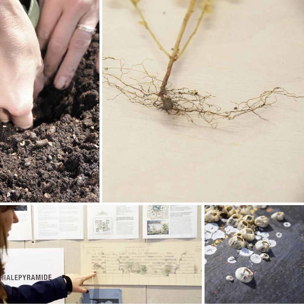 Kronløbsøen - STED arkitekter, rødder, plante, tegning.