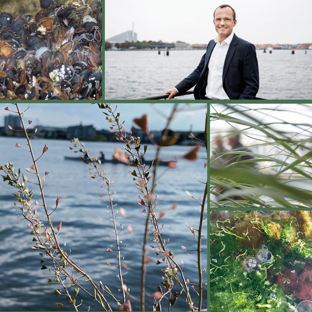 Kronløbsøen - collage ned Henrik Steenstrup, direktør for Ejendomme og Byliv i By & Havn, vand, liv under vandet og grønt i byrum.